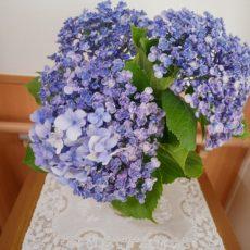 季節のお花をいただきました