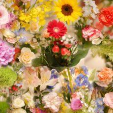今月のお花🌻