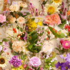 今月のお花✾