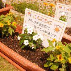 花植え【おひさま分教室】