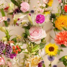 今月のお花🌼